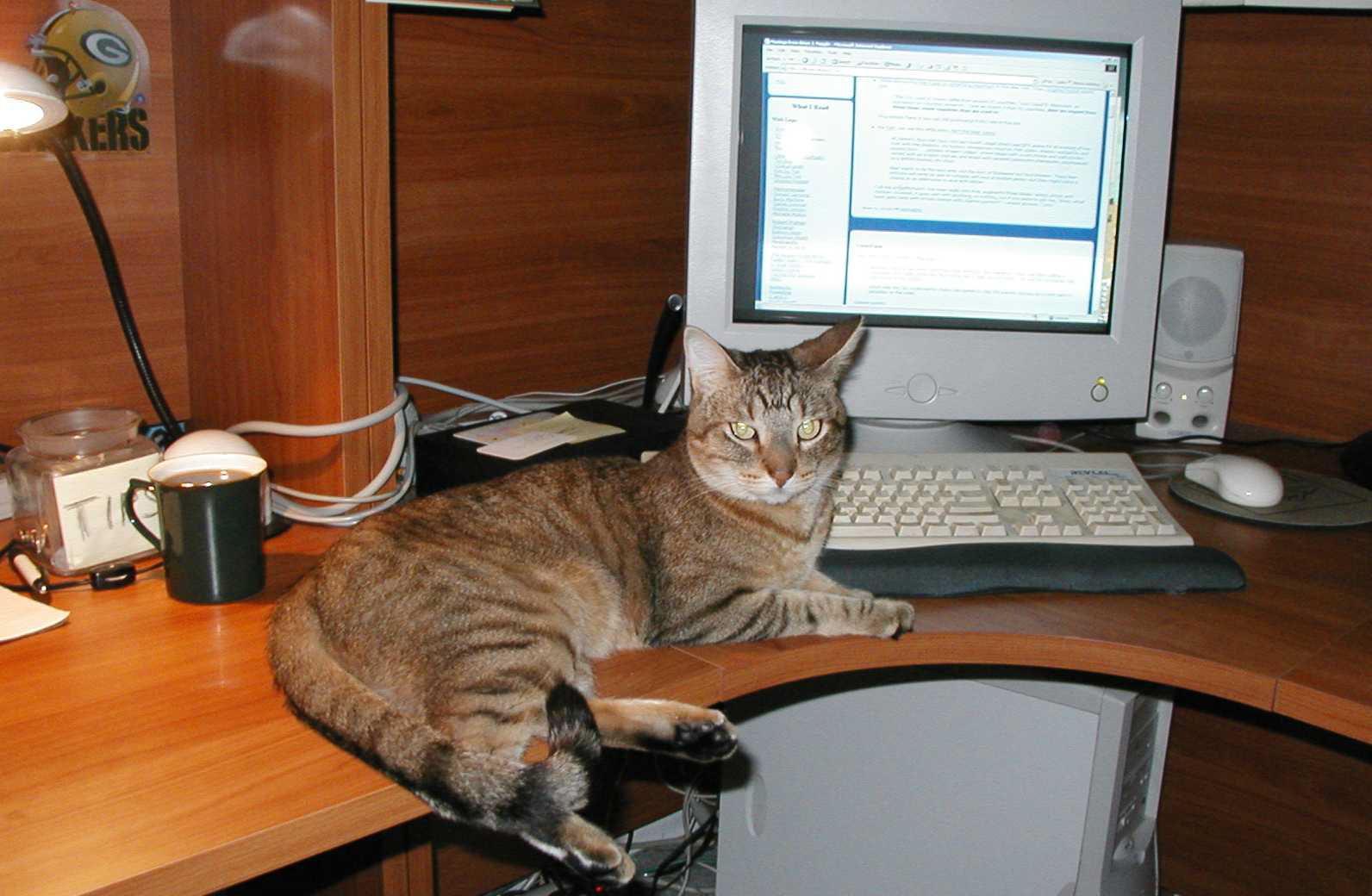 Ajax, the office cat