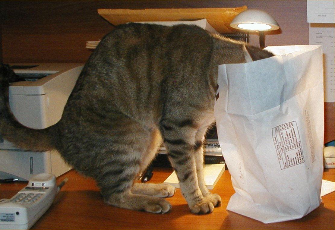 Ajax, the doughnut cat