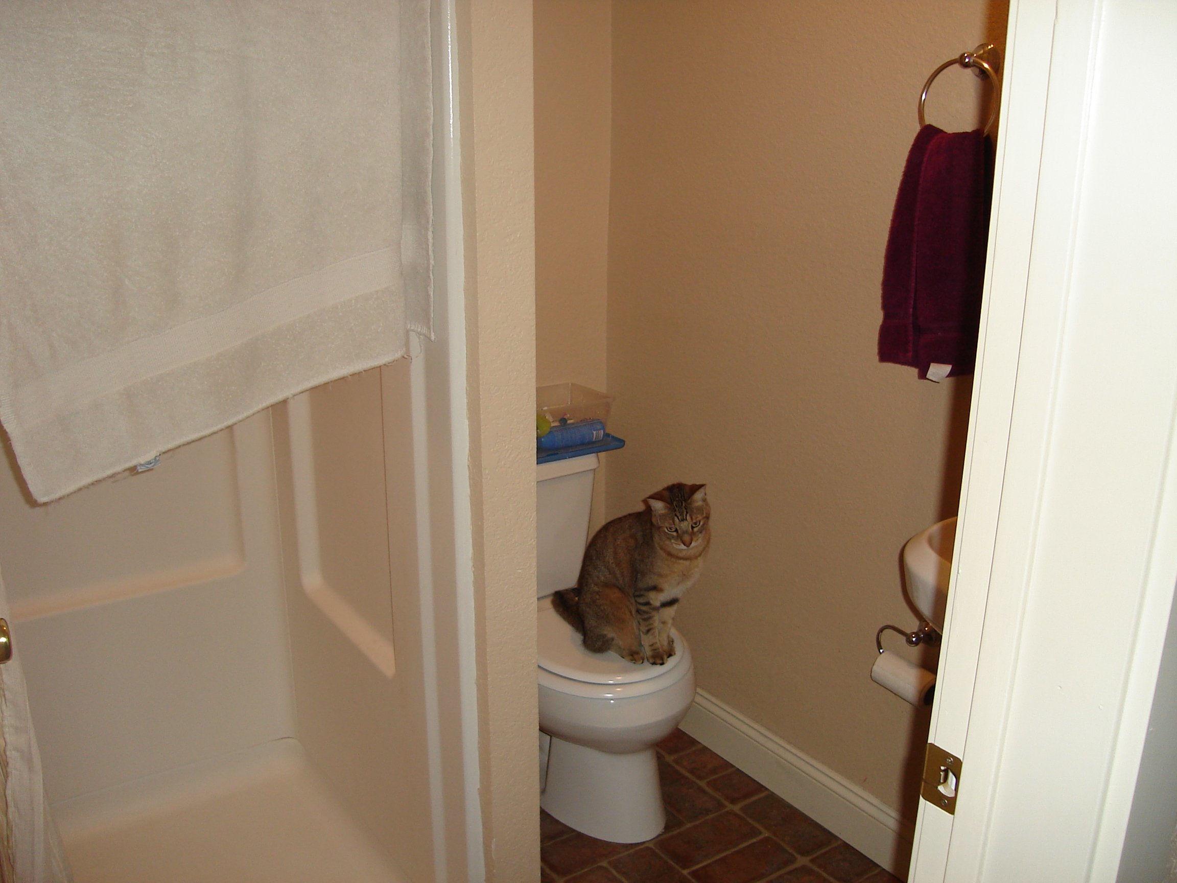 Ajax, the bathroom cat