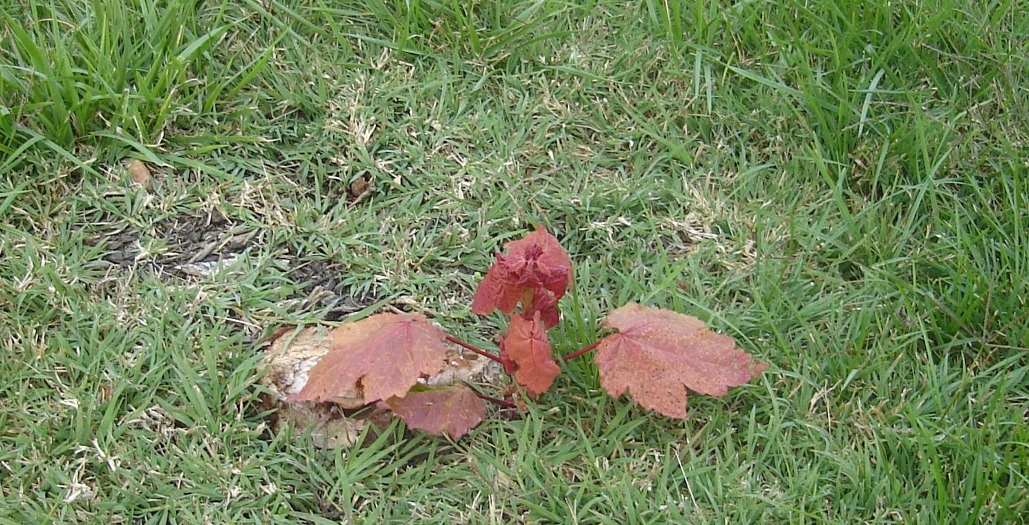 Fall Foliage at Nogglestead