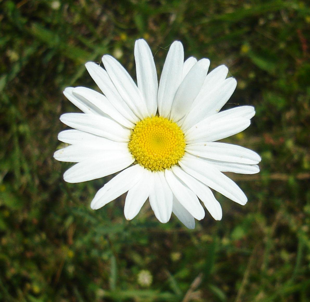 A Nogglestead wildflower